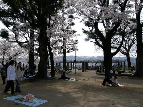 geotagged hanami takasaki 花見 群馬県 高崎 gummaprefecture geo:lon=139002525 geo:lat=36320166