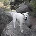 Small photo of Coda Dog