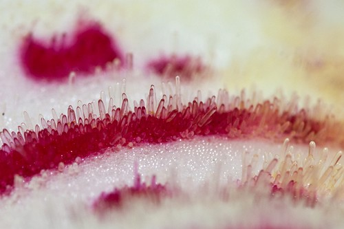surface of an orchid flower
