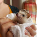 Acorn is displeased after a bath. by Justin Snow