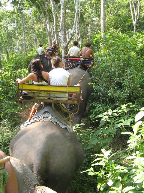Header of Elephant Ride