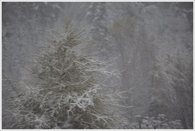 ...première neige...!!! (3)