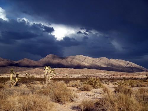 Stormin in the Desert