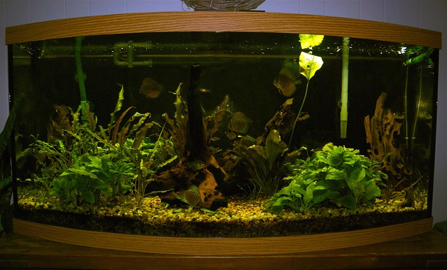 75 Gallon Bow Front Aquarium http://www.flickr.com/photos/warrenlynn/4287083178/