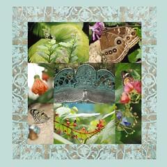 Florida: mosaic 馬賽克 mosaïque μωσαϊκό mosaico モザイク Florida