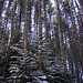 The End~ The Enchanted Pine Forest, Van Hoevenberg Trail, Adirondacks, NY
