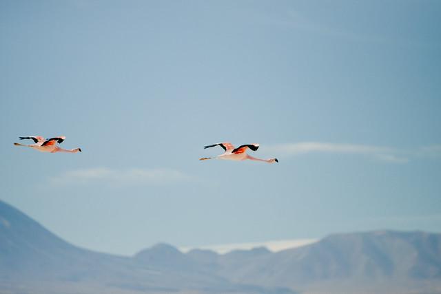 Laguna Chaxa. Reserva Nacional Los Flamencos. Salar de Atacama. Chile