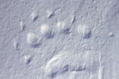 Noordpool0052_CR