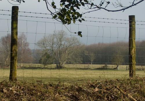 Framed hedge