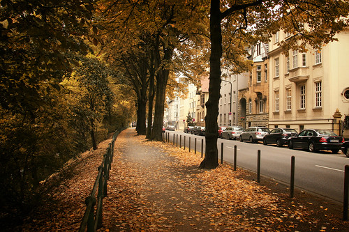 Autumn in a City