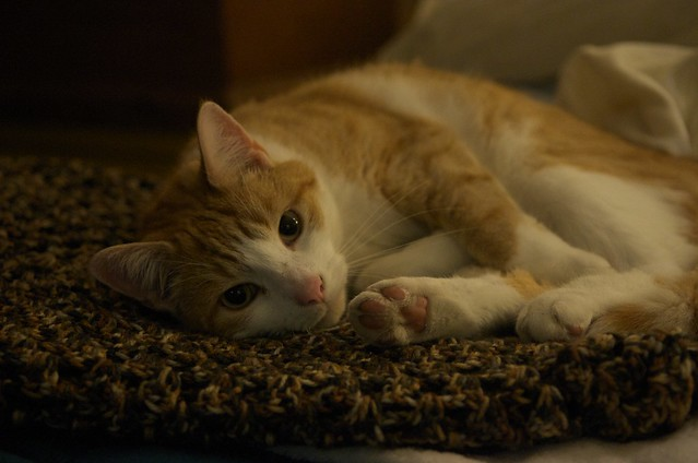 cama de tu mascota