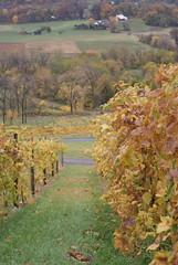 Bluemont Vineyard Vines 6