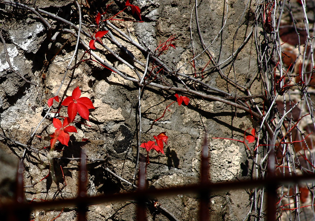 A wall in Pompeii with some spectacular autumn color. I knew some of you would appreciate it. Image courtesy Kari Bluff.