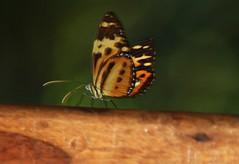 Iguassu-Fauna u. Flora im Regenwald