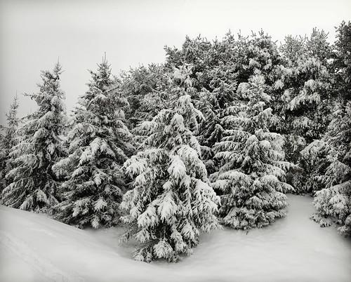 trees panorama copyright snow virginia panoramic allrightsreserved zuikodigital35mm ©daveelmore