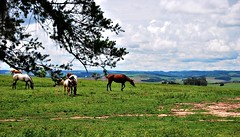 sitio das andorinhas / porto amazonas /paraná