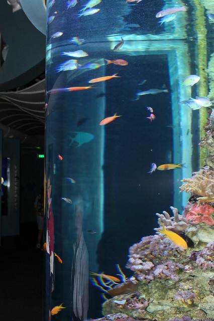 Sydney aquarium vertical tanks flickr photo sharing for Vertical fish tank