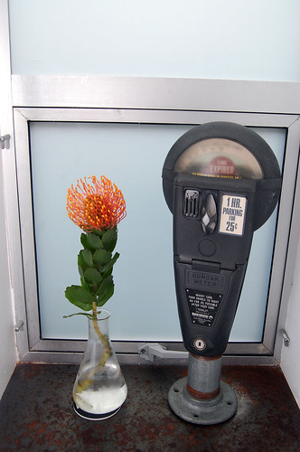 Still Life with Parking Meter and Extraterrestrial Plant
