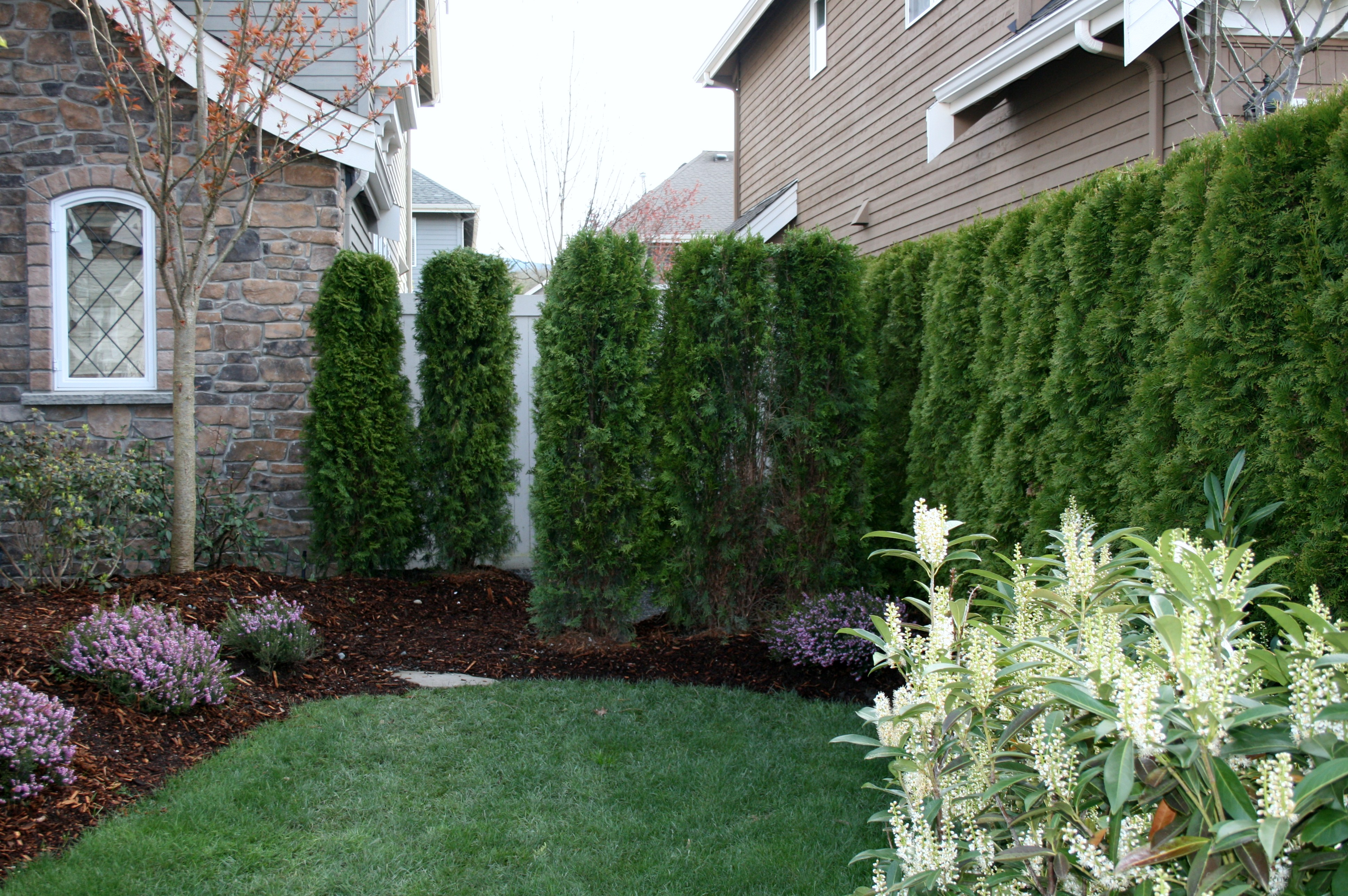 plant a front side yard privacy hedge for the home