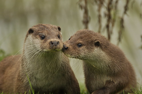 Friendly Otters