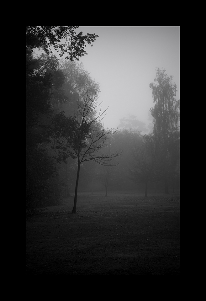 Photography: Mist by Nicholas M Vivian