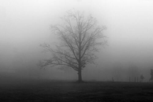 Mistree Morning I