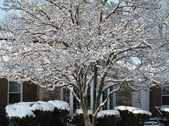 2010 snow storms