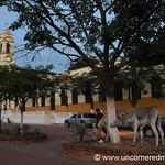 Donkeys Feeding on Main Street - Concepcion, Paraguay