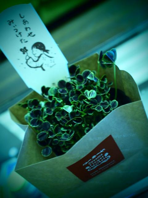 Photo:Four-leaf clover 四つ葉のクローバー By G O L D T O P