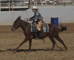 animal sports, rodeo, equestrianism, western riding, mare, equestrian sport, sports, western pleasure, charreada, reining, barrel racing,
