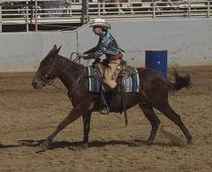 pack animal(0.0), jockey(0.0), animal sports(1.0), rodeo(1.0), equestrianism(1.0), western riding(1.0), mare(1.0), equestrian sport(1.0), sports(1.0), western pleasure(1.0), charreada(1.0), reining(1.0), barrel racing(1.0),