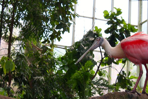 Birds at the National Aviary in Pittsburgh