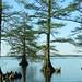 Reelfoot Lake #1