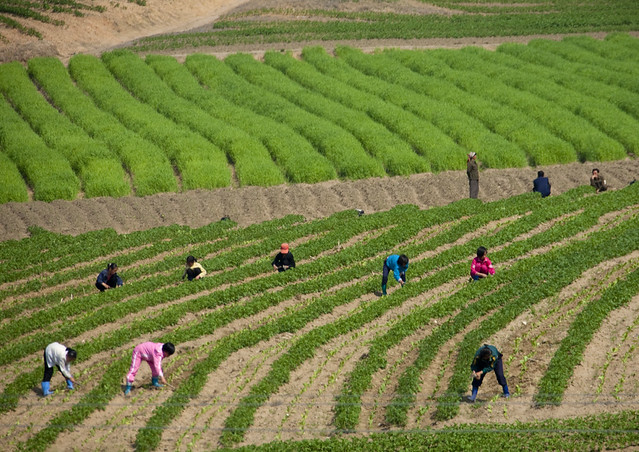 Kids working in fields - North Korea
