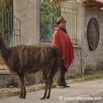 A Man and His Llama - Zumbahua, Ecuador