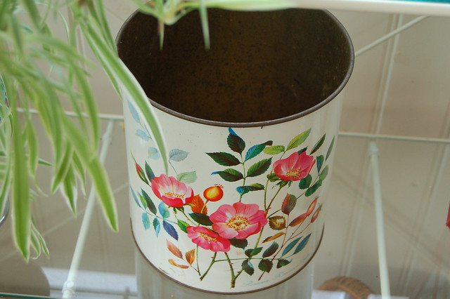Rosty rose bucket photo by iHanna (Copyright Hanna Andersson)