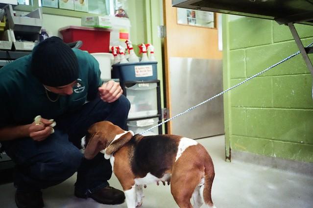 Victor Dog Food Breeder Program