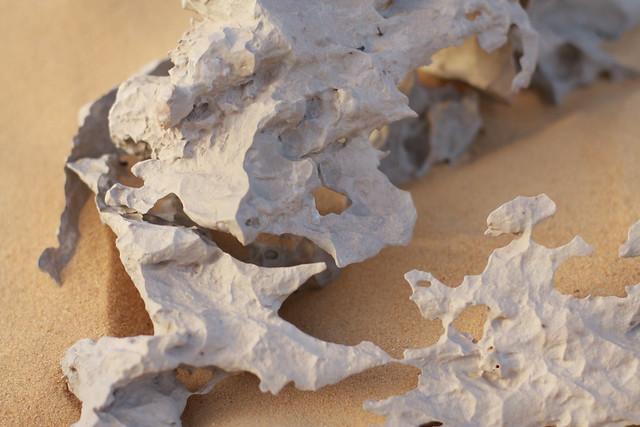Coral petrificado en Farafra, El Desierto Blanco de Egipto