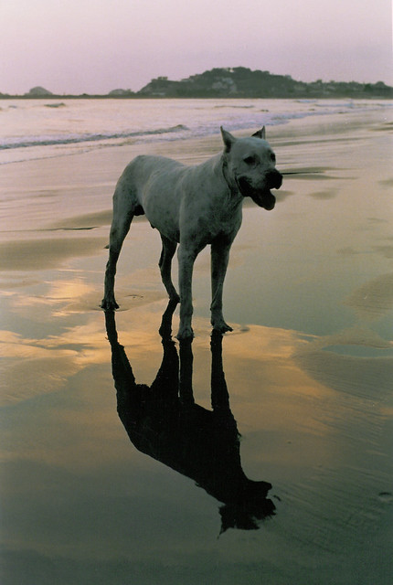 dog on the beach at sunset in Mazatlan, Mexico (2002)