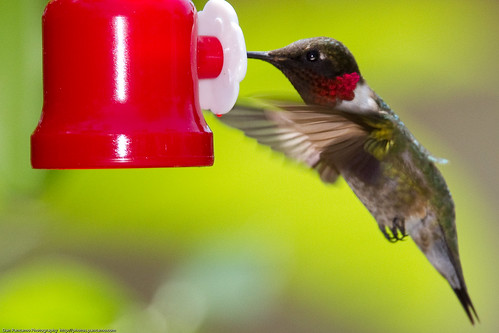 bird nature hummingbird april birdsinflight hummingbirds 2010 bif rubythroatedhummingbird canon14xii canon300mmf28isusm