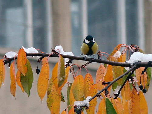 autumn snow bird fall nature colors yellow sony rivanova риванова