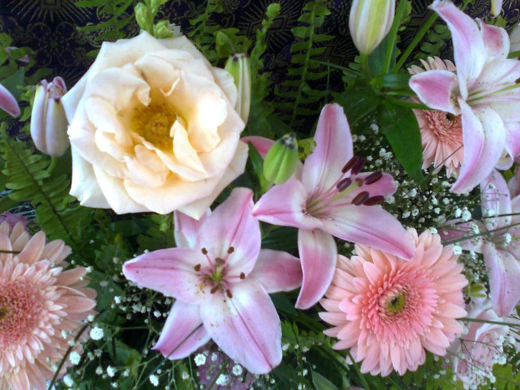 Elvira qrs most interesting flickr photos picssr rosas lilis y gerberas izmirmasajfo