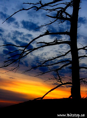blue sunset sky orange tree silhouette clouds newfoundland bare branches stjohns nfld longpond pippypark canonefs18200mmf3556is