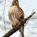 RT-Hawk! by JRIDLEY1