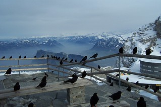 Hungry birds trying to steal our chocolate at the summit of Mount Pilatus.