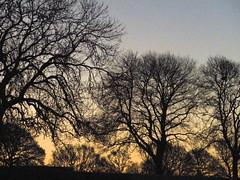 Winter Morning Trees
