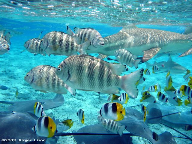 Snorkeling in Bora Bora: A bucket full of fish