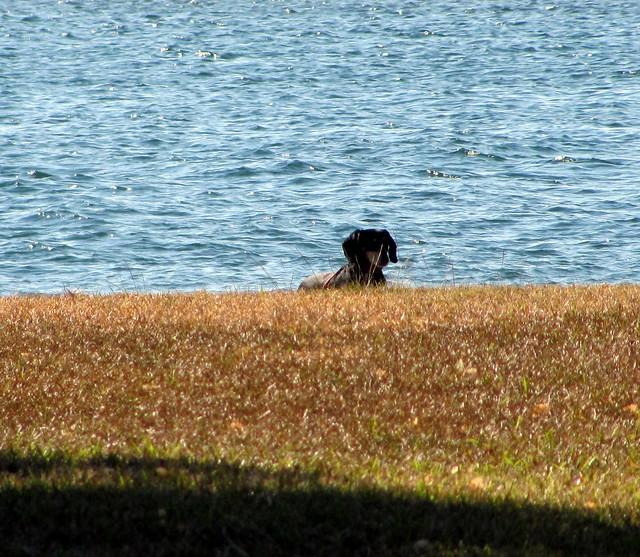 Flagler County Dog Parks