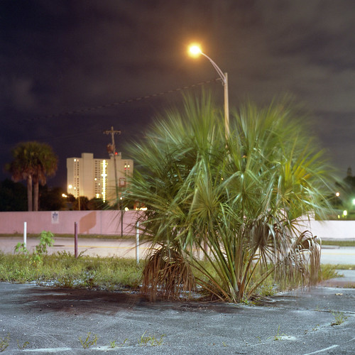 christmas street eve light urban usa west color 6x6 tlr film beach lamp night analog america dark square lens us reflex focus long exposure fuji mechanical florida suburban south united parking tripod patrick twin windy palm mat v 124g highrise pro epson after medium format fl states manual 500 joust yashica 220 estados 80mm f35 fujicolor c41 unidos yashinon v500 160s autaut soflo patrickjoust