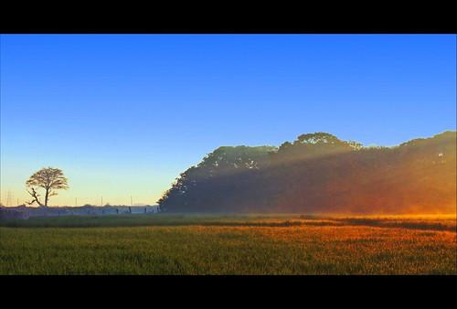 india green art nature beauty digital sunrise canon eos rebel is kiss zoom bokeh bangalore special sunrays karnataka efs paddyfield xsi x2 durai bengaluru 450d 55250 durairaj indiabpc goldermorning